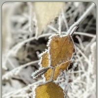 Рисуют осень и зима :: Наталья Ильина