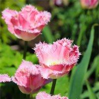 Весеннее цветение :: Нина Кутина