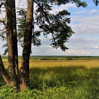 Летний пейзаж :: Вячеслав Маслов