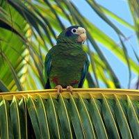 ...и зелёный попугай!!! :: оля san-alondra