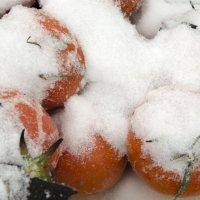 Не яблоки на снегу но итак сойдет) :: Виктория Большагина