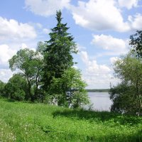 Бодрым шагом к реке...... :: Светлана Z.