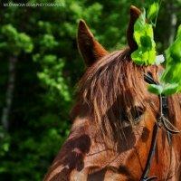 Лошадь :: Ольга Милованова