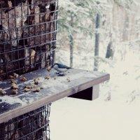 Зимний пейзаж :: Марина Анищук