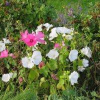 Цветы для Веры :: Natalia Harries