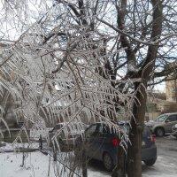 Заледеневшая капель или Ледяной ажур :: Галина
