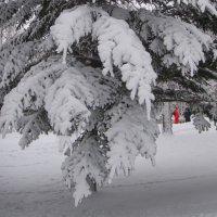 Зима вернулась :: Марина К