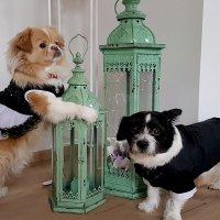 Эмми и Пеппи верные Друзья! :: Mila .