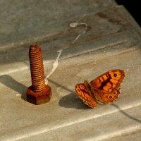 рыжая парочка : ржавый болт и бабочка :: Александр Прокудин