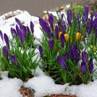 Зима не хочет уходить....возвращается вновь и вновь... :: Galina Dzubina