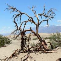 Долина Смерти, США :: vitper per