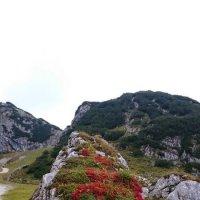И на камнях растут цветы :: vitper per
