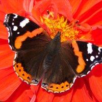 Цветная бабочка в шелках :: SELENA4950