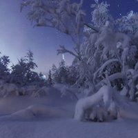 Ночной лес :: Татьяна Мурина