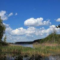Лесное озеро :: OlegVS S