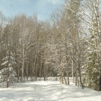 март..в лесу.. :: Михаил Жуковский