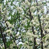 Хочется весны... :: татьяна