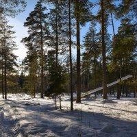 В весеннем лесу :: Алексей (GraAl)
