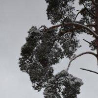 Зима :: Ольга Беляева