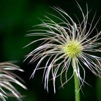 В Ботаническом саду :: Елена Буслаева