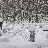 Снежно и пасмурно :: Лидия (naum.lidiya)