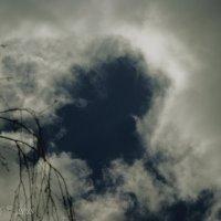 Профиль в  небе. :: Елена Kазак