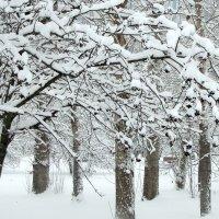 Ветка рябины под снегом! :: Жанна