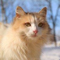 И в марте думами полна душа кошачья...:) :: Андрей Заломленков