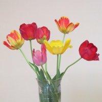 Букет тюльпанов разных :: Дмитрий Никитин
