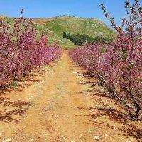 vit5 сады цветут :: Vitaly Faiv