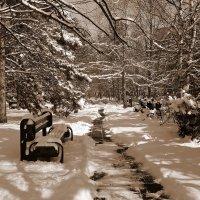 Снег в Краснодаре :: Роман Величко