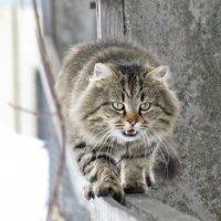 Фотограф, я доберусь и до тебя! :: Vladimir Perminoff
