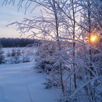 Морозное утро :: Sergey Chelishev