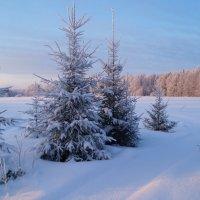 Зимняя дорожка :: Sergey Chelishev