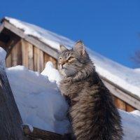 Где там весна? :: Sergey Chelishev