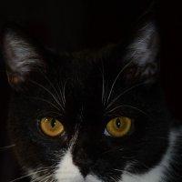 Мой любимый котик :: Натали