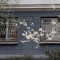 Весна стучится в окно :: Наталья (D.Nat@lia) Джикидзе (Берёзина)