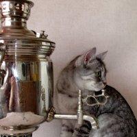 Чашечку чая  налейте... :: OLLES