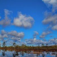 Облака над лесом :: Татьянка *