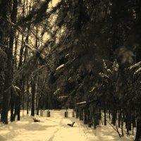 Скамейка в Павловском парке :: Alex Bezvetrenniy