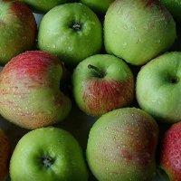 Вкусные яблоки :: san05 -  Александр Савицкий