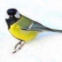 Птичка синичка :: Raduzka (Надежда Веркина)