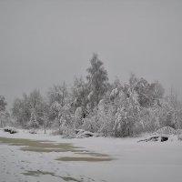 Снежное безмолвие :: Алексей (GraAl)