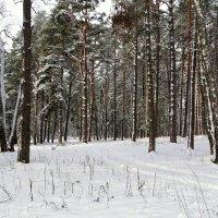В окрестностях Смоленска :: Милешкин Владимир Алексеевич