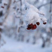 Молодии января :: Екатерина Торганская