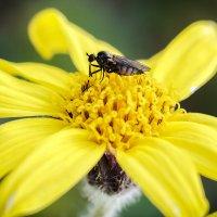 Желтый цветок. :: Юрий Харченко