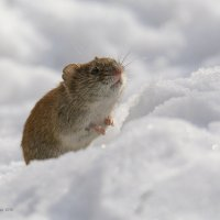 Предчувствие тепла :: Pepsovich