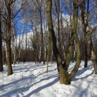 С зимой не спутаешь :: Андрей Лукьянов