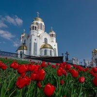 тюльпаны у Храма :: Игорь Козырин