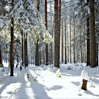 Мартовский лес :: Leonid Rutov